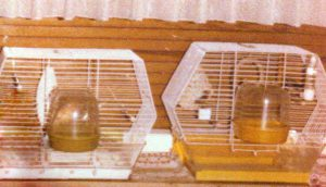 Vogelhaltung im Käfig