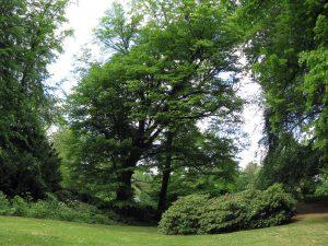 Viel Platz für Gartenvögel im Stadtpark Steglitz.