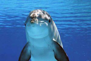 Weniger Vögel als vielmehr Delfin Flipper.