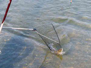 Statt eines Fisches ging ein Vogel ins Netz.