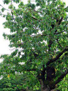 Ob ent- oder zugeflogen: am Ende sitzen die Vögel doch alle auf demselben Baum.